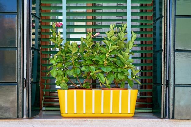 Okno z zieloną migawką i żółtą doniczką. włochy, wenecja, burano