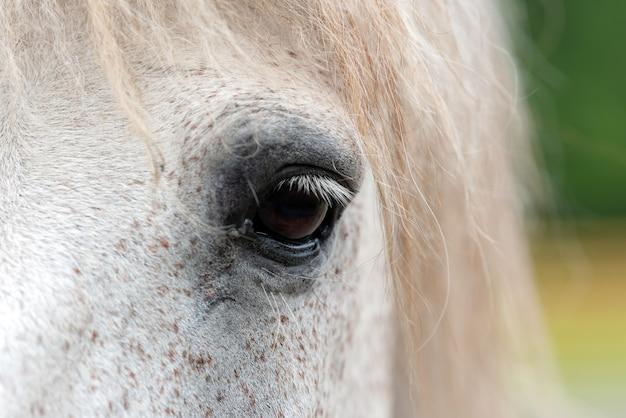 Oko białego konia