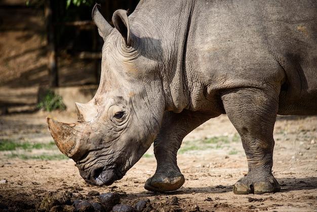 Oko nosorożca, tekstura skóry nosorożca