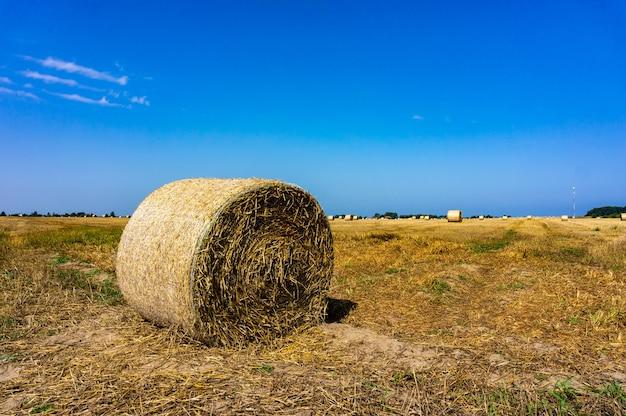 Okrągła bela siana na polach z błękitnym niebem