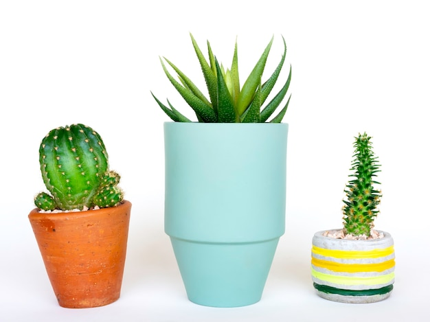 Okrągła nowoczesna doniczka ceramiczna jasnozielona z zieloną soczystą rośliną i betonową donicą oraz doniczką z terakoty z kaktusem na białym tle.