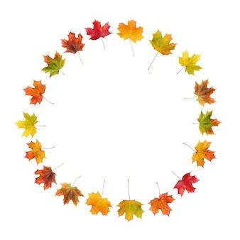 Okrągła rama jesiennych liści klonu na białym tle na białej powierzchni