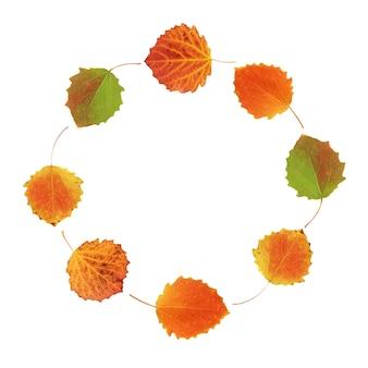 Okrągła rama jesiennych liści osiki na białym tle na białym tle ze ścieżką przycinającą. liście czerwono-pomarańczowe. zielnik.