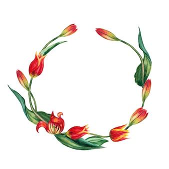 Okrągła rama realistycznych czerwonych tulipanów na łodygach z liśćmi. akwarela ilustracja