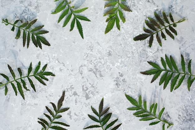 Okrągła rama tekstu z zielonych liści. skład na szarym tle. widok z góry, leżał płasko. copyspace.