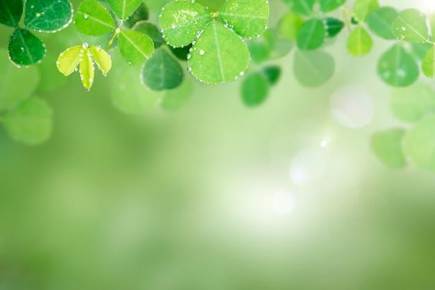Okrągłe liście