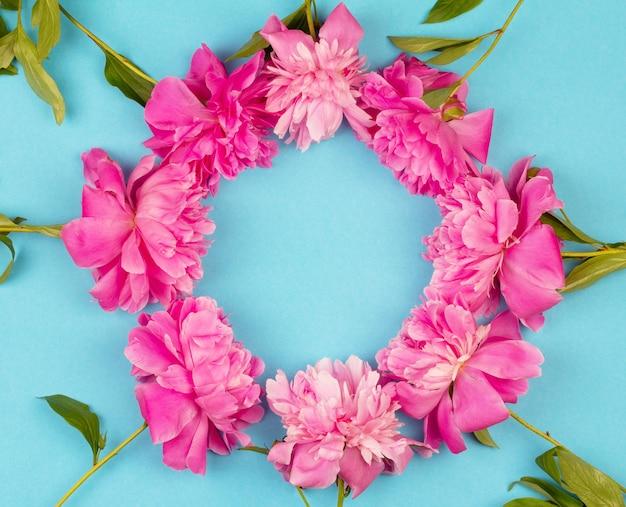 Okrągły wieniec z bukietem różowe kwiaty piwonii z bliska na niebieskim tle