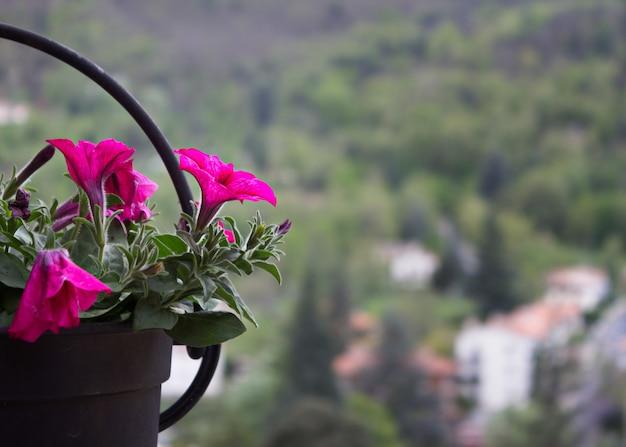 Okrągły żelazny garnek z petuniami z krajobrazem