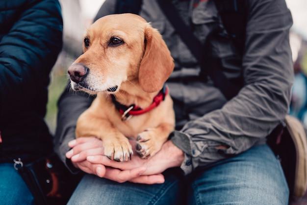 Okrążenie psa odpoczynku na świeżym powietrzu ze swoim właścicielem