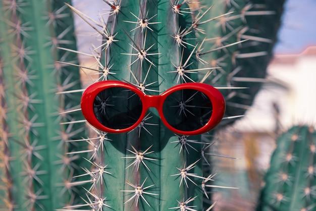Okulary przeciwsłoneczne na kaktusie. koncepcja wakacji w gorących krajach