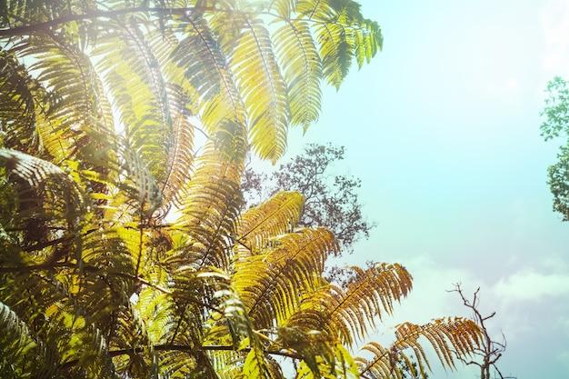 Olbrzymi liść paproci w lesie tropikalnym. hawaje, usa