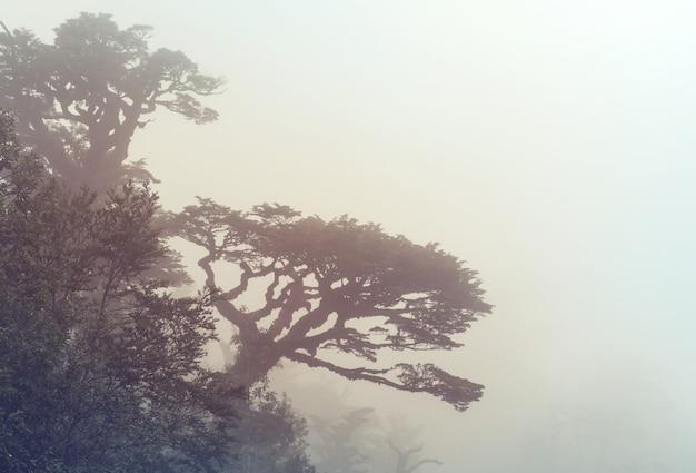 Olbrzymie drzewo w lesie tropikalnym. piękne krajobrazy w parku pumalin, carretera austral, chile.