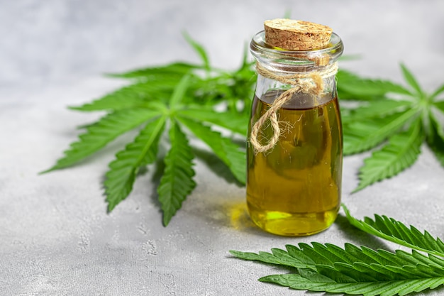 Olej konopny w przezroczystej butelce i liściach konopi na szarym tle.