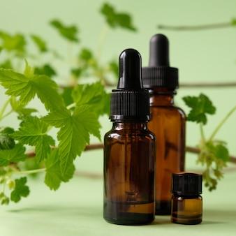 Olejek eteryczny spada ze szklanego zakraplacza. beri-beri, wzmacniające układ odpornościowy. gałąź porzeczek