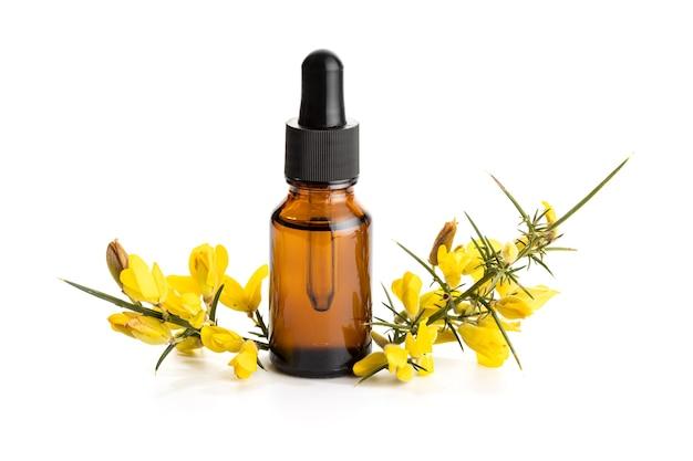 Olejek eteryczny yellow gorse na białym tle na białej powierzchni. olej ulex europaeus