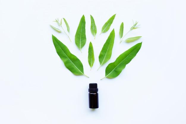 Olejek eukaliptusowy z zielonymi liśćmi na białym
