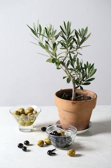 Oliwki i drzewo oliwne