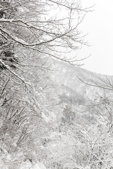 Opad śniegu z lasem