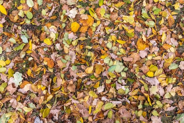Opadłe jesienne liście leżą na trawie w lesie naturalne tło wielobarwnych liści