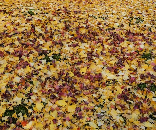 Opadłe jesienne liście na ziemi żółtego miłorzębu i czerwonego klonu