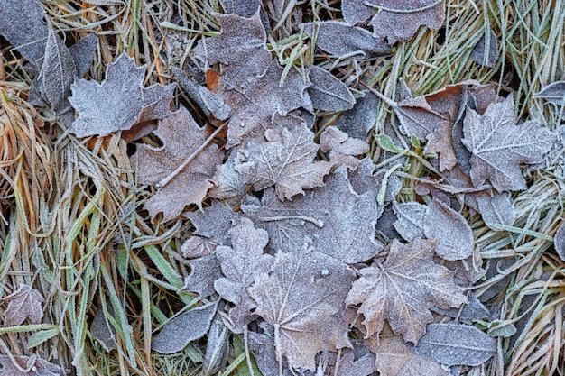 Opadłe jesienne liście pokryte szronem. witaj zimo