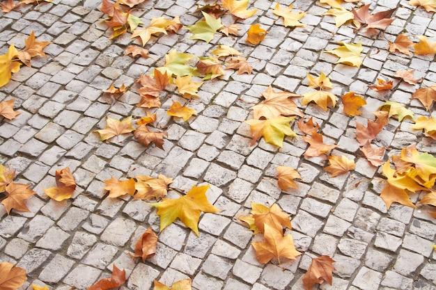 Opadłe liście na bruku