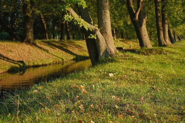 Opadłe liście na trawie, zbliżenie. selektywne skupienie. ciepły jesienny wieczór w parku, lipy nad brzegiem stawu, naturalne tło