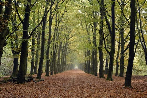 Opadłe suche liście w parku otoczonym licznymi drzewami jesienią