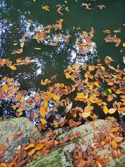 Opadłe żółte liście w jeziorze dżungli.