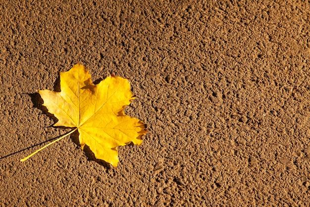 Opadły żółty liść klonu na tle bruku z miejsca na kopię.