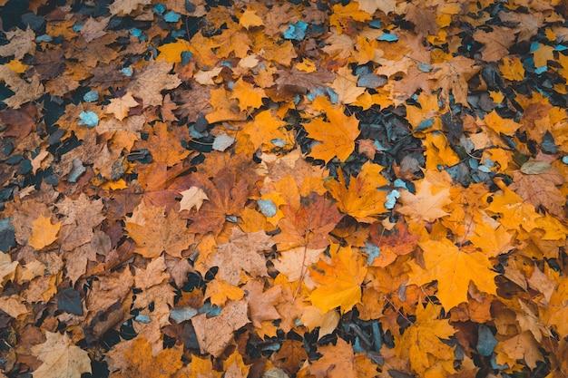 Opadłych liści jesienią w tle