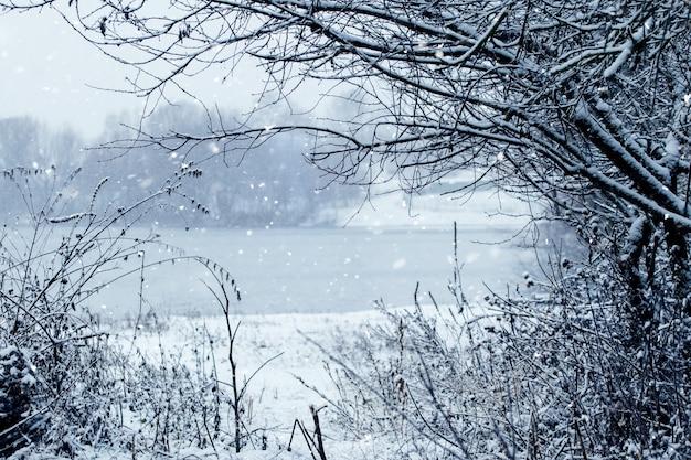 Opady śniegu na brzegu rzeki, zimowy krajobraz z rzeką i drzewami w zimie