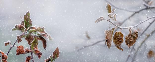 Opady śniegu w ogrodzie zimowym. gałęzie jabłoni z uschniętymi liśćmi podczas opadów śniegu, zimowe tło
