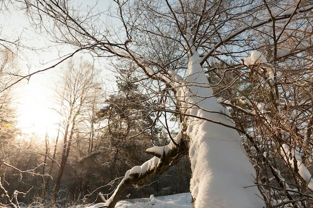 Opady śniegu w parku