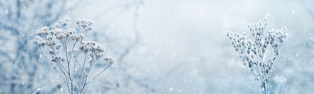 Opady śniegu w zimowym lesie. pokryte śniegiem suche rośliny na rozmytym tle pod opadami śniegu. wesołych świąt i szczęśliwego nowego roku pozdrowienia, tło z miejsca na kopię. zimowa bajka.