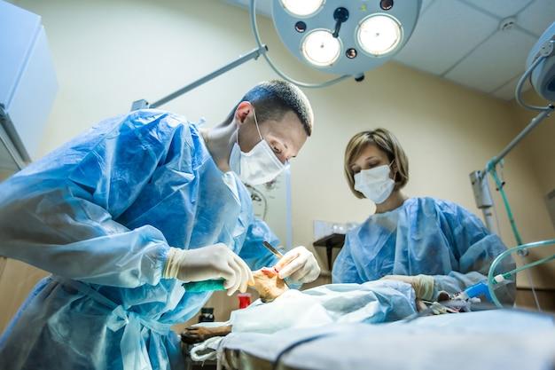 Operacja łapy psa w klinice weterynaryjnej.