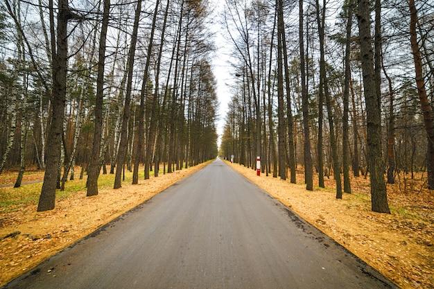 Opróżnia utwardzoną drogę przez las
