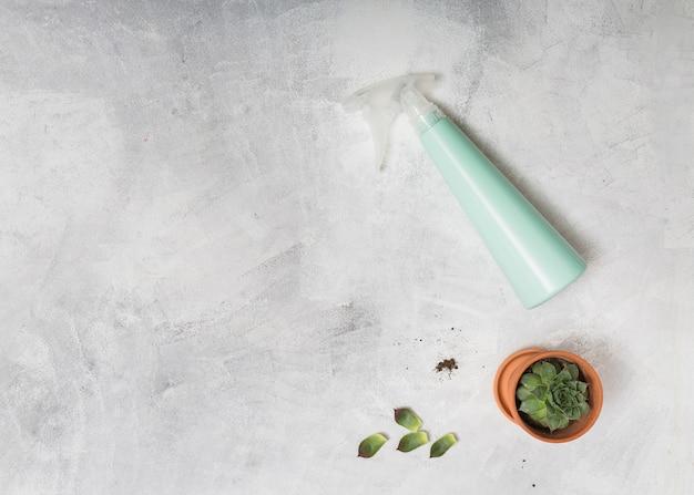 Opryskiwacz i kaktus