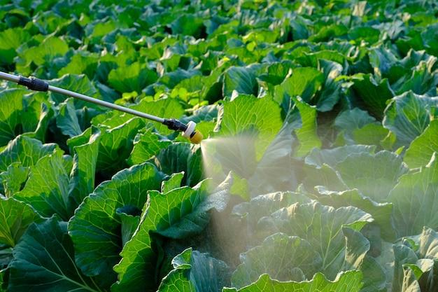 Opryskiwacz w sprayu środek owadobójczy i chemia na roślinie kapusty