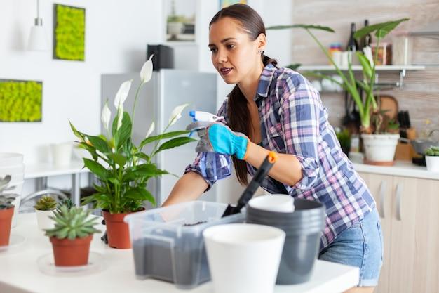 Opryskiwanie rośliny doniczkowej w kuchni w domu