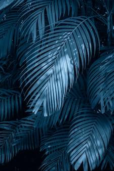 Opuszcza abstrakcjonistycznego palmowego tropikalnego liścia kolorowego kwiatu na ciemnej tropikalnej ulistnienie naturze