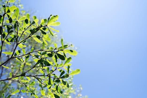 Opuszcza drzewa na niebieskiego nieba tle