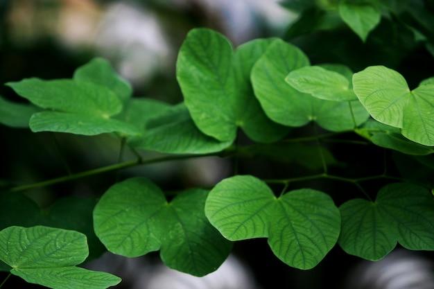 Opuszcza tropikalnego lasowych drzew tekstury tło
