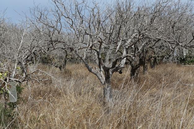 Opuszczona plantacja drzew owocowych