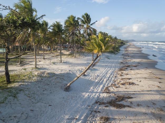 Opuszczona plaża z palmami kokosowymi na wybrzeżu bahia w brazylii