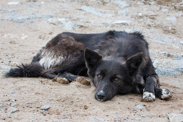 Opuszczony bezdomny bezdomny pies na ulicy smutny samotny pies na lokalnej drodze