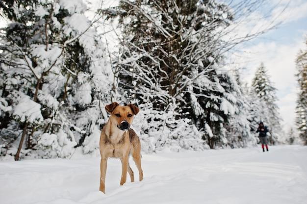 Opuszczony pies na zimowej drodze leśnej,