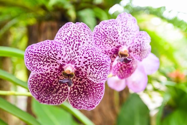 Orchidea vanda z liśćmi