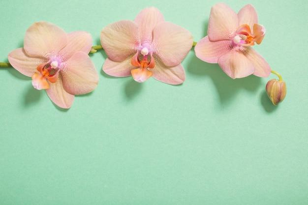 Orchidee na zielonym tle
