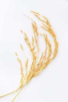 Organiczne uszy niełuskanego na białym tle